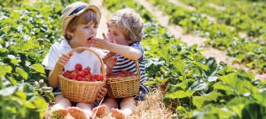 Strawberries Source of Polyphenols